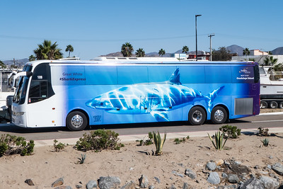 Our San Diego to Ensenada Transportation