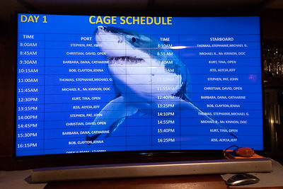 The Daily Submerged Cage Schedule
