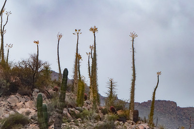 Interesting Cactus in the Baja