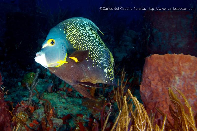 Boca Raton Dives 2011-12-18