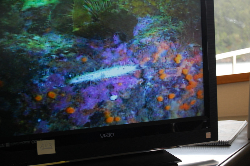 Colorful undersea life in the San Juans