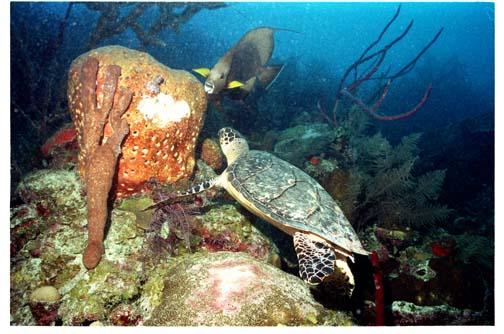 Turtle & Angel fish