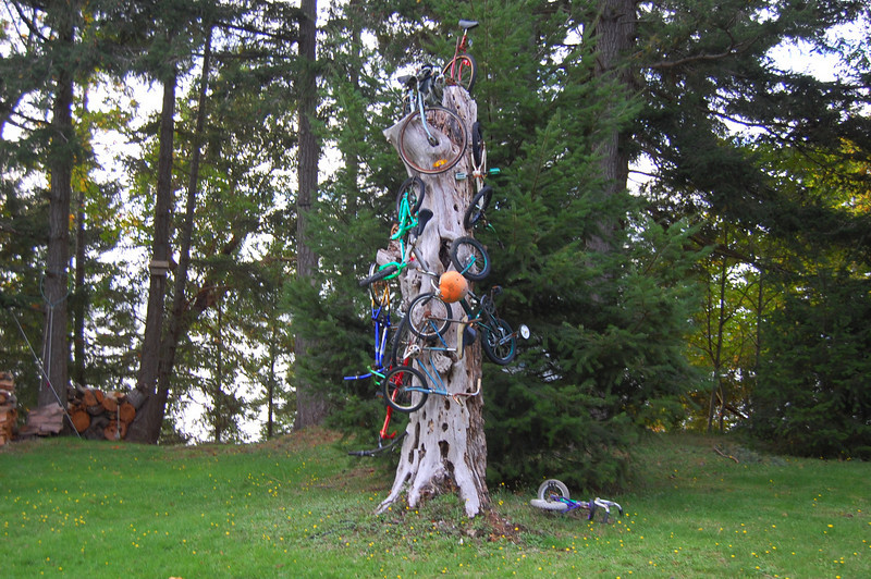The bicycle tree!