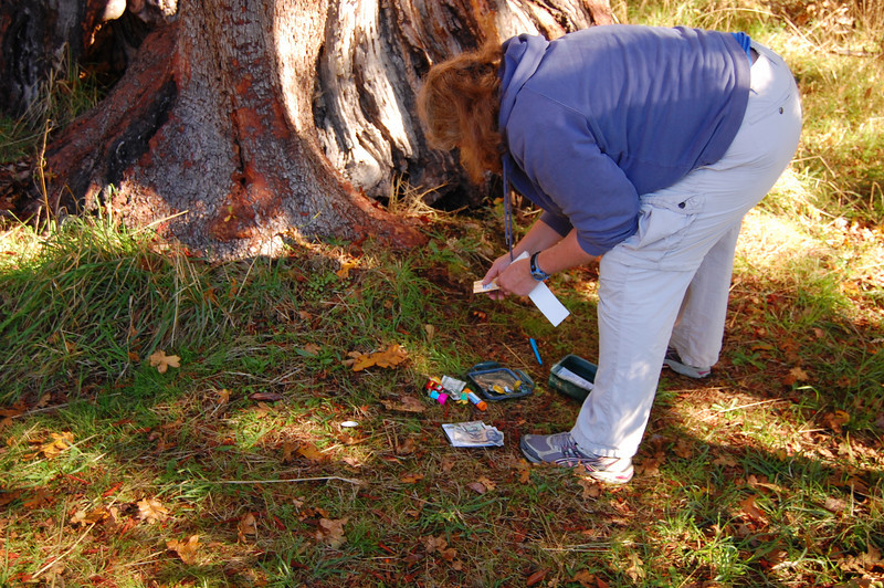 Finding a geocache in Helliwell park.