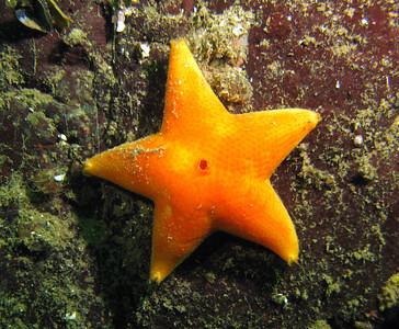 Howe Sound SeaDoc/REEF dives