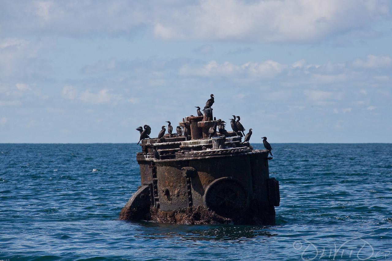 Bird on Shipwreck