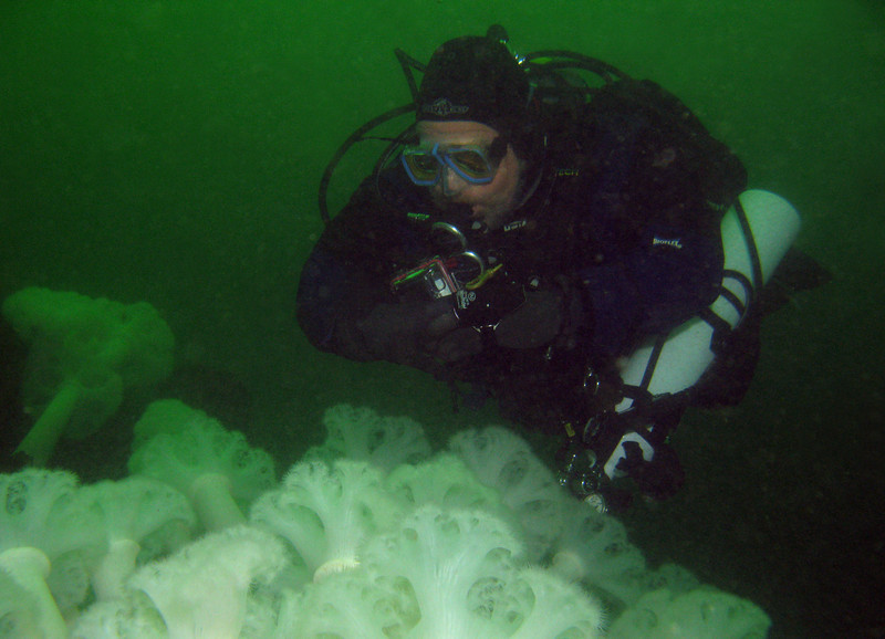 Tom glides over a field of Plumose anemones