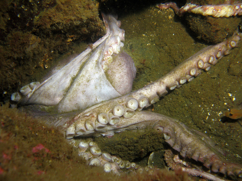 We saw two dead octopus at the Knuckle.