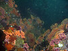 Looking down through a canyon filled with colorful Hydrocorals