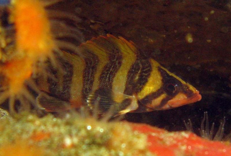 Little tiny baby Treefish hiding in a crack