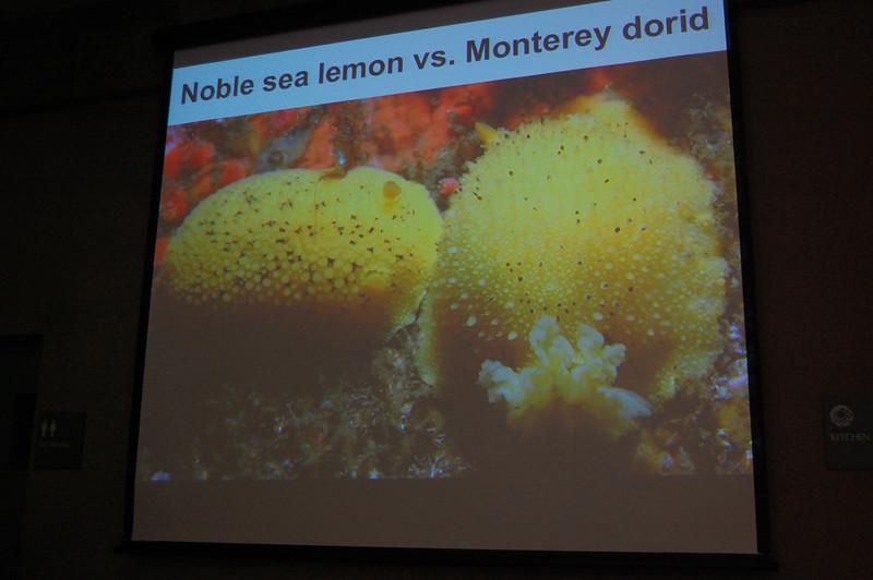Some of Steve Lonhart's invertebrate class