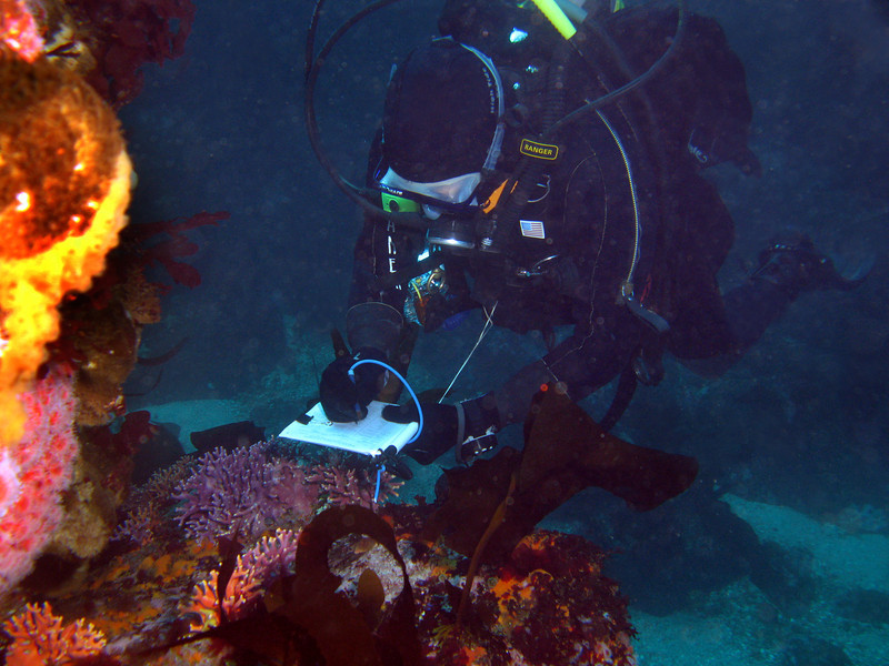 David Todd surveys Purple Hydrocoral on the reef