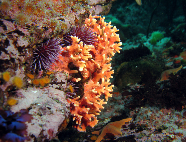 Purple Hydrocoral, Purple Urchins, and more