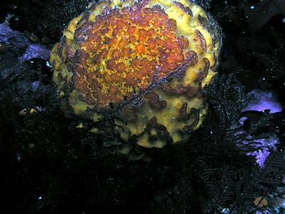 Monterey Offshore