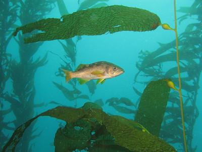 Monterey Underwater 2013