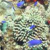 Makogai Village Reef