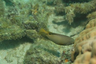 Mystery Fiji Fish