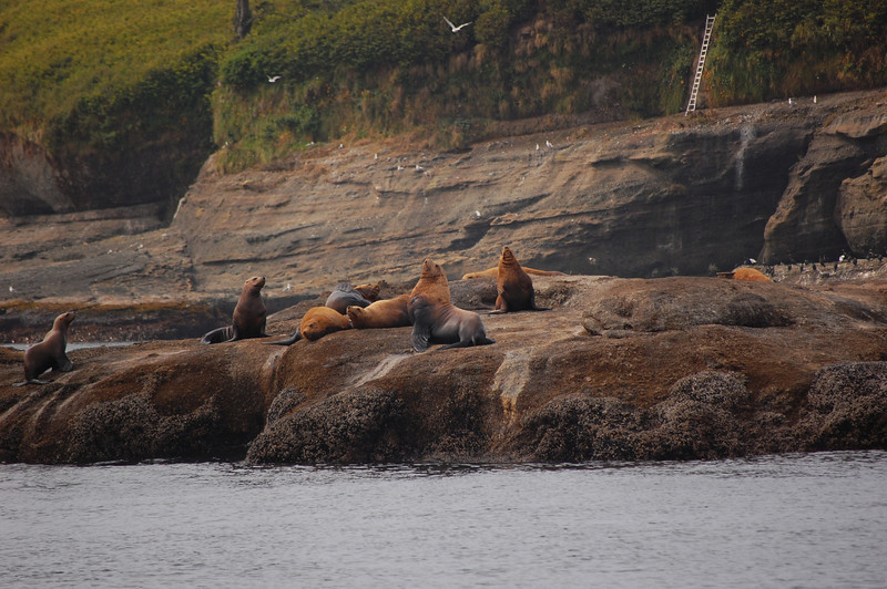 Sea Lion fun
