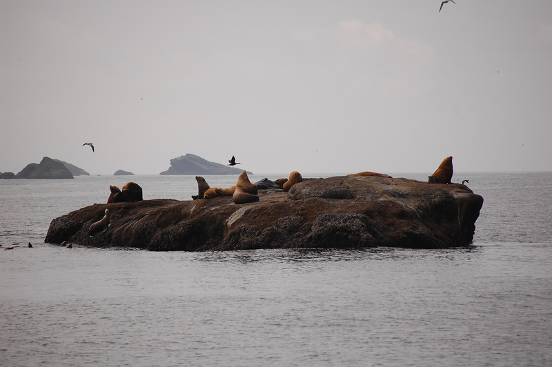 Sea Lion fun