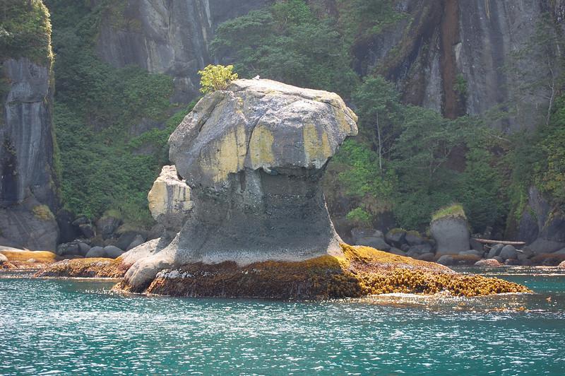 'Shroom Rock