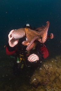 Octos propulsion is one way, so its fairly easy to keep him close to you by putting your hand in his escape direction