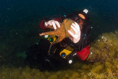Octopussy-19