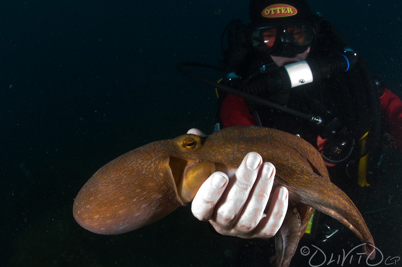 Octopussy-24