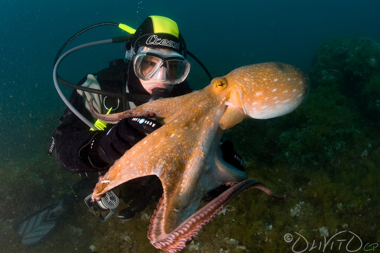 Octopussy-01