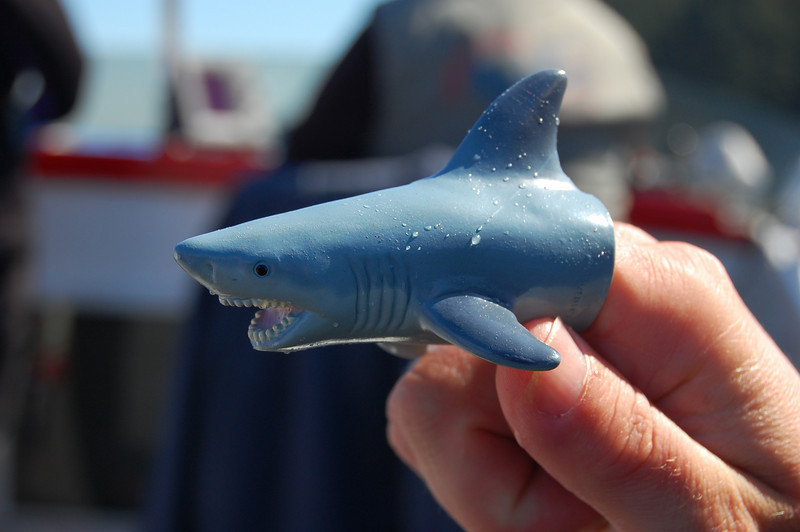 Dave's pet shark. Quite dangerous.