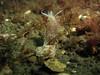 Little nudibranchs