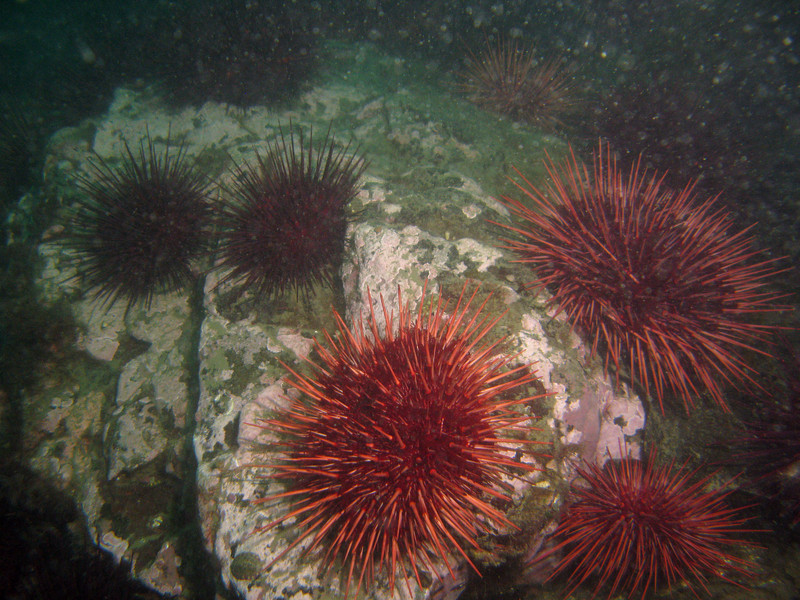 Sea Urchins adorn the rocks
