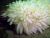Squid Eggs