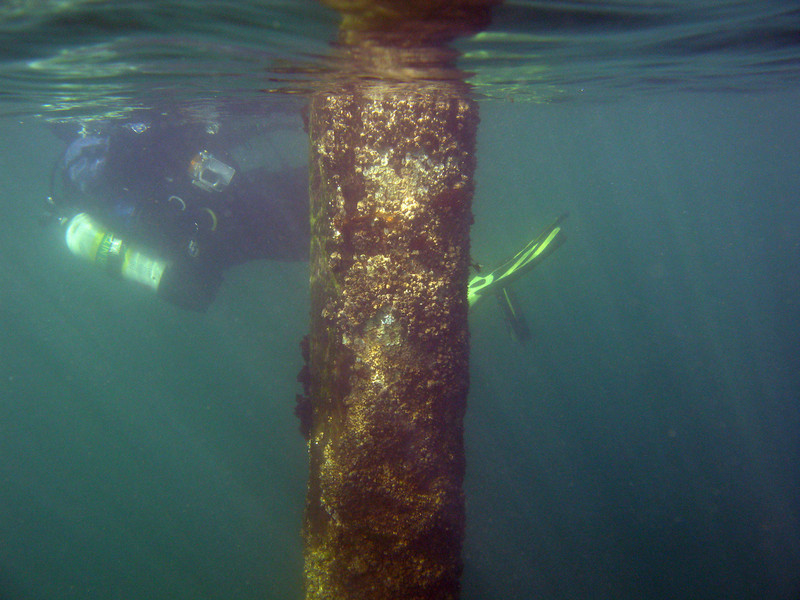 Surface swimming out to the end of the pilings