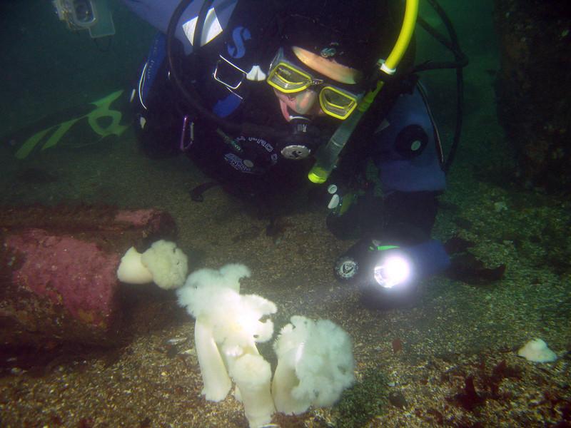 Claude examines some Plumose anemones on the bottom.