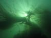 Sunlight, kelp shot