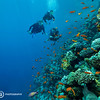 Diving, Red Sea, Sharm El Sheikh, Egypt