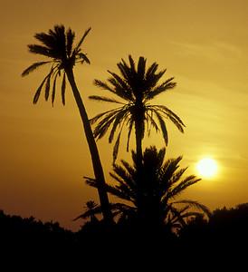 Palm Trees at Sunset, Jerba
