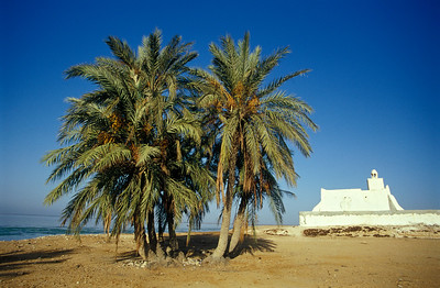 Palm Tree and Mosque in Guellala, Djerba