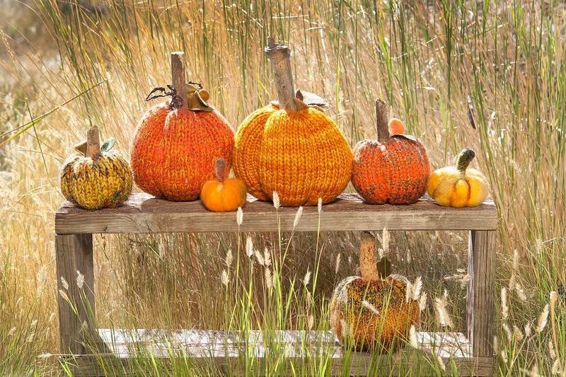 Do Dads for You Pumpkins