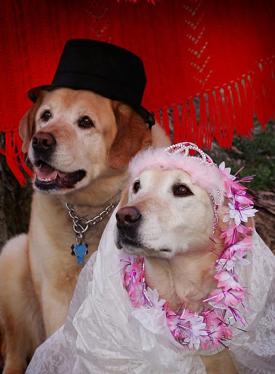 Moishe and Mazel's Wedding