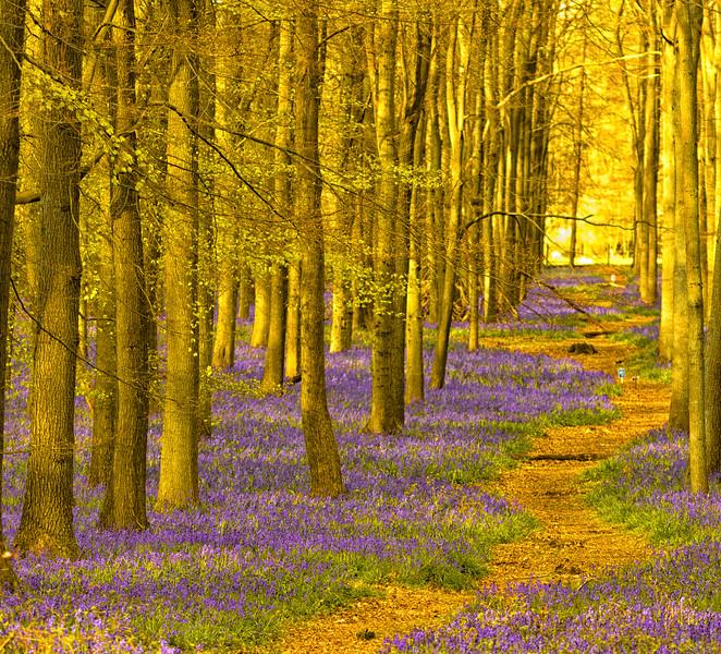 Walk the woods