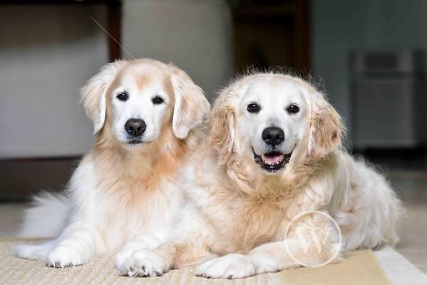 Dockter Dogs
