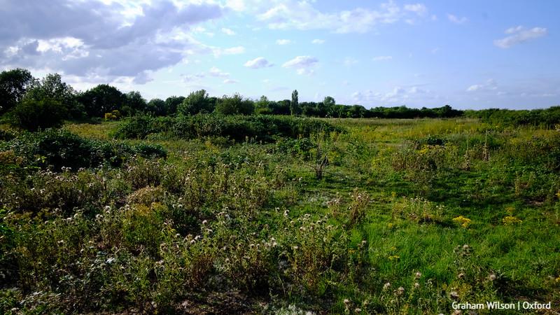 Burgess Field reclaimed landfill (1990s)