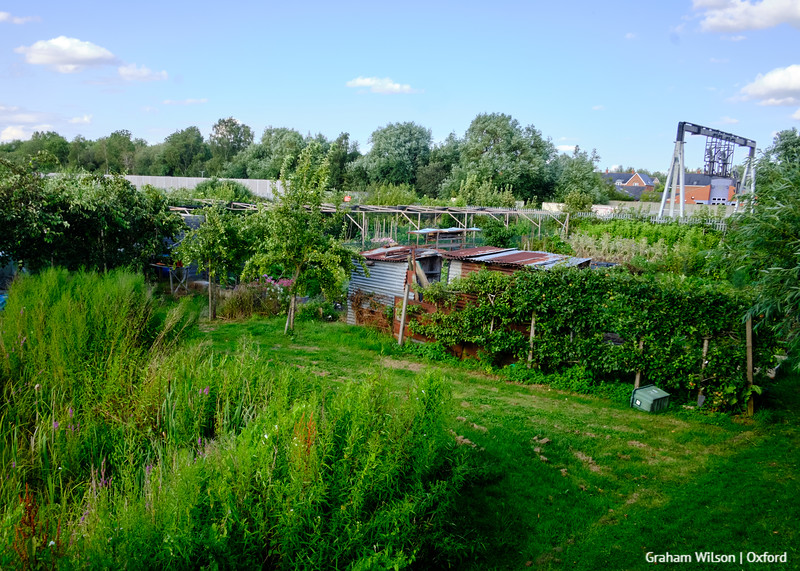 Trap Ground Allotments Oxford with HS2 Gantry on parallel railway track