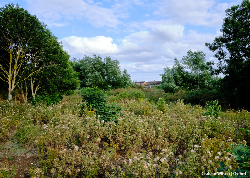 View across Burgess Field Nature Reserve (former landfill) towards Oxford.