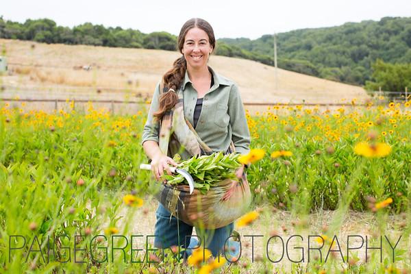 Indigo Harvest 7/25/16