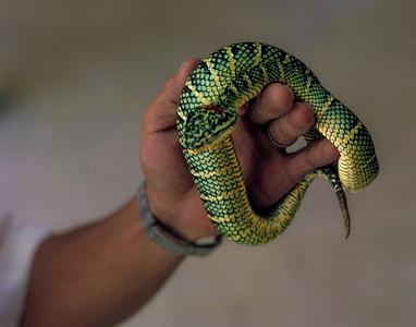 00533_s_9aery4vxc0023 Snake Bali