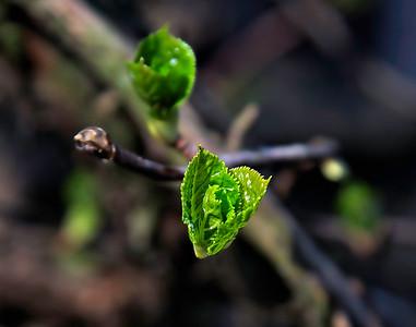 New Leaf-7303 14 11