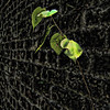 20030708-Wall Leaves Savannah 3