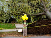 Boy with Uprooted Tree from Hurricane Sandy, Belmont, MA 2012